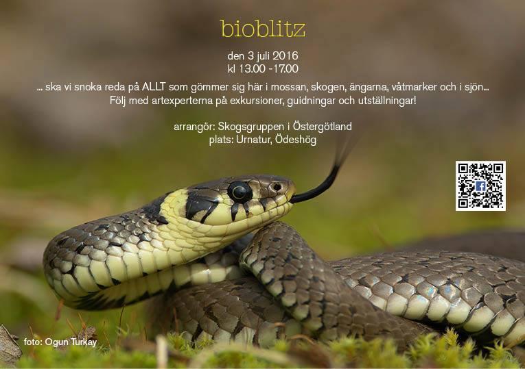 Bioblitz (1) (1)